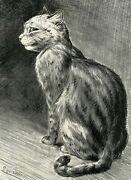 1904 Louis Wain Antique Print Thoughtful Cat Edwardian Highly Collectible