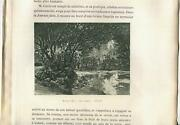 Antique Pond Forest Nature Plants Woods Trees Rocks Arch Botanical Small Print