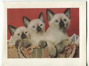 Vintage Siamese Kittens Cat In Wicker Basket Lithograph Print On Note Card Ny