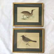 Two Antique Ornological Prints Of The American Bittern And Gold-vented Thrush.