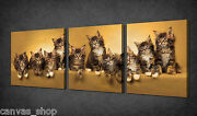Little Maine Coon Kittens Family 3 Panels Wall Art Canvas Print Ready To Hang
