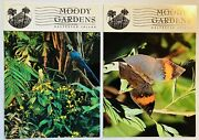 Galveston Texas Moody Gardens Lot Of Two Postcards Vintage Butterfly Parrot Tx