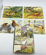 Vintage Wooden Cube Block Bird Puzzles With Puzzle Pics....vintage Eagles And