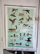 Ned Smith Lot Of 4 1964 Waterfowl Identification Guide Pa Game Commison