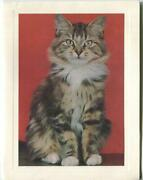 Vintage Long Hair Tabby Maine Coon Cat Animal Lithograph Art Print Note Card