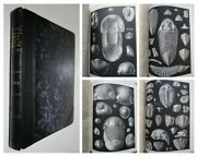 1864-1883 British Trilobites Salter Beautifully Illustrated Book Fossils Geology