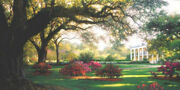 Southern Hospitality By Larry Dyke S/n Le Lithograph Landscape Trees 17x34