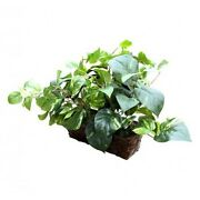 Spy-max Security Fake Plant Hidden Camera W/ Wifi Remote View And 20 Hour Battery