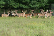 2018 Whitetail Deer Hunt Trophies Central Pa Guided