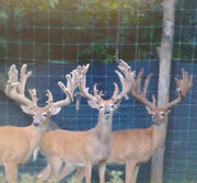 Hunting 2018 Trophy Whitetail Deer Buck Hunt Pa Guided