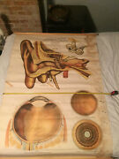A.j. Nyntrom And Co. Eye And Ear Anatomy Vintage Canvas Poster 1963 Original