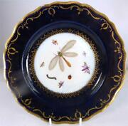 N937 18th Century Antique Chelsea Porcelain Plate Dragonfly Insects B