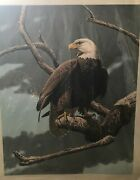 Bald Eagle Endangered Species By Guy Coheleach