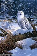 Snowy Owl Painting Stretched Canvas Wall Art Print Artist Snow Birds Of Prey