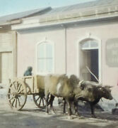 Ox Cart At The Sewing Machine Shop In Chili, Hand Tinted Antique Photo On Glass