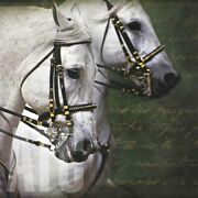 36wx36h Carousel Horses By Kimberly Vickrey - White Harness Choices Of Canvas