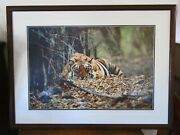 Rare Out Of Print Thomas D Mangelsenbad Boy Of The Forest Tiger 39x29 Ltd Ed