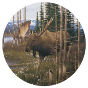 Wild Wings Moose Cotton Grass Coasters Set Of 4 Michael Sieve. 4209101068