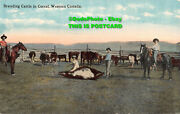 R367587 Western Canada. Branding Cattle In Corral. 206. Bloom Bros. C. T. Photoc