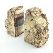 Slice Bookends Fossil Wood Silicified Extra Quality Furniture Specimen