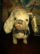 Rare Very Early Antique Glass Eyed Pekanise Toy Doggy /steiff /pre 1 World War
