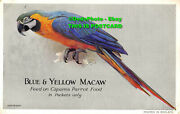 R040085 Blue And Yellow Macaw. Feed On Caperns Parrot Food