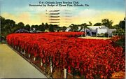 Orlando Lawn Bowling Club Surrounded By Hedge Of Flame Vine Orlando Fl.