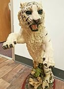 Vintage 24 Large White Tigerattack Position Statue