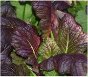 Mustard Greens, Red Giant, 500 Seeds, Non-gmo, Heirloom