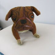 1906 Bulldog With Muzzle By Steiff With Blank Button 15 Long