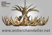 Real Antler Whitetail Deer Oval Chandelier, Rustic 8 Lights , Lamps Wto-5, Acs