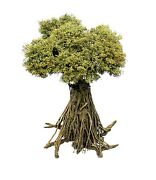 Model Trees Product 135 Scale. Approx 39 Cm. Height. Nt-002