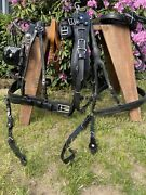 Leaders Worldwide Leather Presentation Harness For Full/horse Size - Black