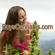 Buyscannabis.com Is A Great Domain Name For Sale Registered At Godaddy