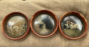 Antique Hand Made Convex Bubble Dome Hunting Dog Prints By Peter Watson Studios