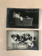 Antique 1907 Cat And Dogs Puppies Real Photo Postcards Lot Rotograph Co. Victorian