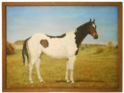 Helene Alison American 20th C Vint Sgnd O/c Spotted Pinto Horse In Open Field