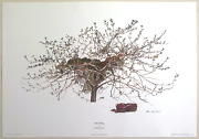Andrew Wyeth Rare 1977 After Picking Collector Large Fine Art Lithograph Print