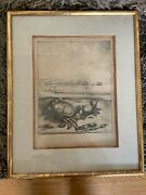19th Century Cabinet Of Curiosity Print Etching Depicting Crabs And Tall Ships