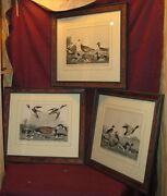3 Antique American Bird Duck Geese Hand Colored Prints Ornithological