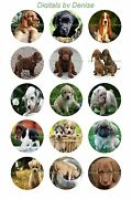 Puppy Dogs 1 Circles Bottle Cap Images. 2.45-5.50 Free Shipping