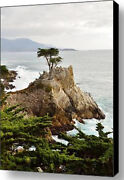 Lone Cypress By Barbara Snyder Monterey California Seascape Canvas Giclee 20x30
