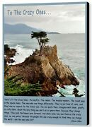 Lone Cypress By Barbara Snyder Monterey California Seascape Canvas Giclee 16x20
