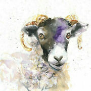 Limited Edition Print Of Black Face Sheep Watercolour By Helen April Rose  367
