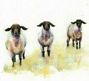 Limited Print Of Three Black Face Sheep Watercolour By Helen April Rose  373