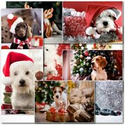 Dog Lovers Mixed Pack Of Premium Christmas Cards And Envelopes Various Pack Sizesc