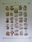 Vintage Pull Roll Down School Wall Chart Poster Of Mushrooms Fungi Foraging