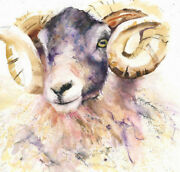 Limited Print Of Black Face Sheep Original Watercolour By Helen April Rose  425
