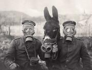 World War 1 Donkey Soldier Gas Mask Glossy Poster Picture Photo Banner Wwi 3257