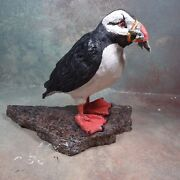 Hand made animal PUFFIN  biird  sculpture statue made of clay